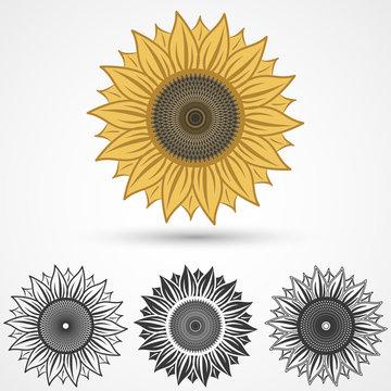 sunflower icon, vector illustration