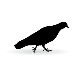 pigeon on the ground realistic vector  illustration
