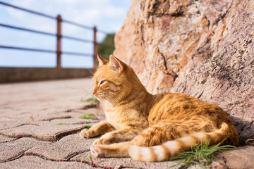 Honey brindle cat who enjoys the sun outdoors