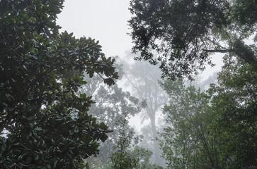 Deep South Foggy Forest