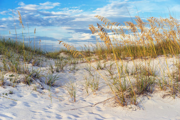 Golden Sea Oats in the Florida Sand Dunes Colorful Sunset
