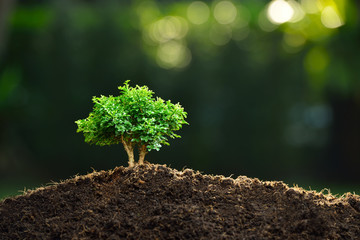 Small plant in the morning light on nature background (bonsai tree)