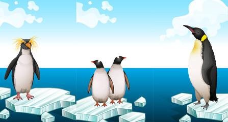 Penguins standing on iceberg
