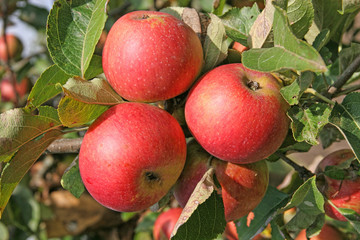 Image result for monument apple bistritsa