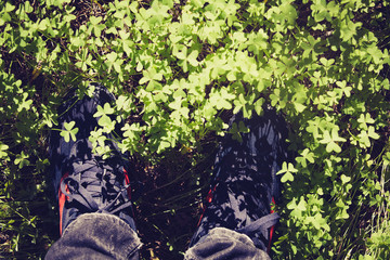 Shoes in the forest covered by clovers. Top view.
