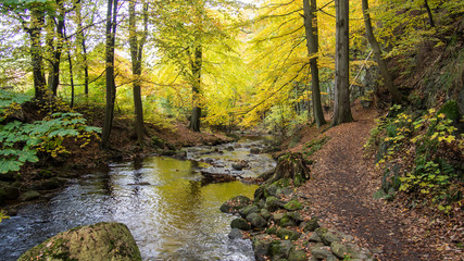 Magic autumn river and forest