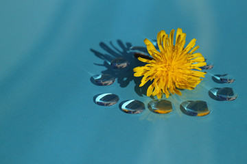 dandelion flower and the drops in the blue #5