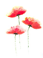 Beautiful stylized red poppy flowers on white, Acrylic color painting