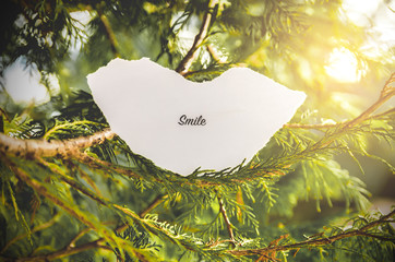 """smile"" text in a pine tree in vintage colors."