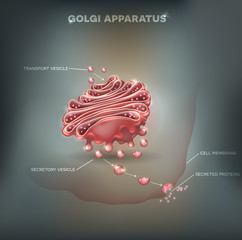 Golgi apparatus abstract background