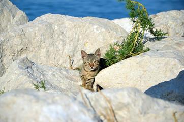 little kitten on the rocks by the sea