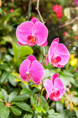 pink orchids growing in a garden in summer