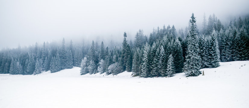 Winter white forest with snow, Christmas background