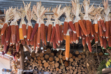 corn cobs hanging to dry