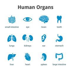 Blue medical human organs icon set on white background