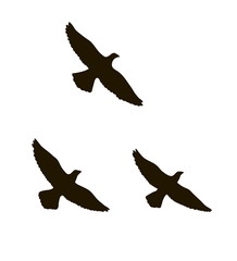 silhouettes of three flying birds