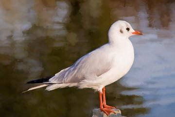 gull, impressionism style  - illustration