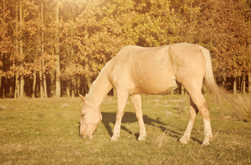 Horse grazing in the field