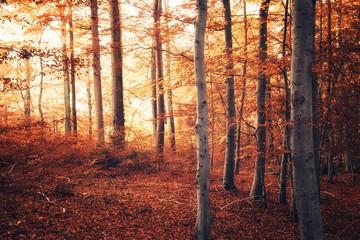 Herbstwald Impression