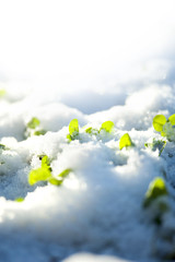 green plants covered by snow