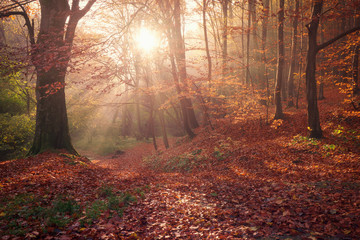 Beautiful autumn forest with sunrise