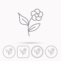 Flower with petals icon. Plant and leaves sign.