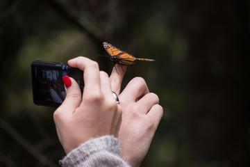Mano de dama toma foto de la mariposa monarca en el dedo del joven.