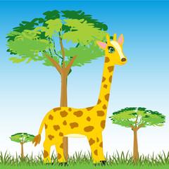 Wildlife zebra on nature