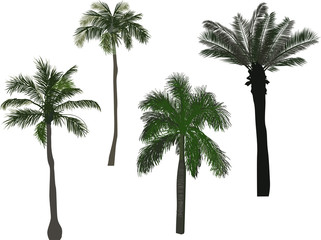 four green high palm trees isolated on white