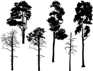 six swamp pine silhouettes isolated on white
