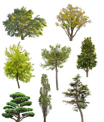 eight isolated trees collection