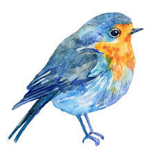bird on a white background .illustration watercolor