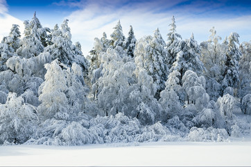 Snowing Forest