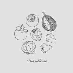 Collection of hand-drawn exotic fruit and berries, vector illustration in vintage style.