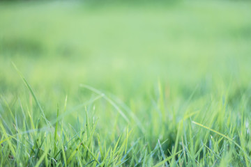 blurred grass out of focus tropical green grass field abstract b
