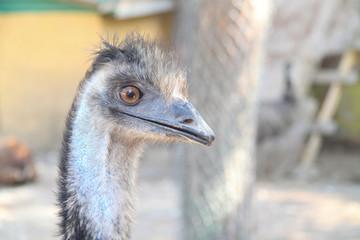 arrogant ostrich