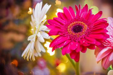 gerbera flowers Christmas 2