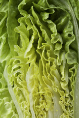 slice of lettuce macro shot