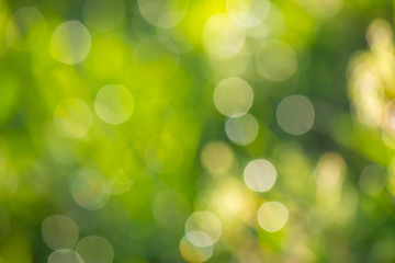 natural blur bokeh of foliage of tree crowns in the daytime