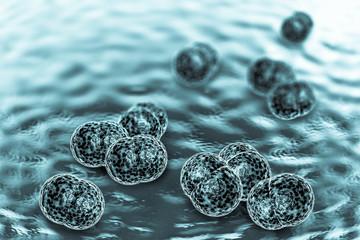 Meningitis Bacteria Infection