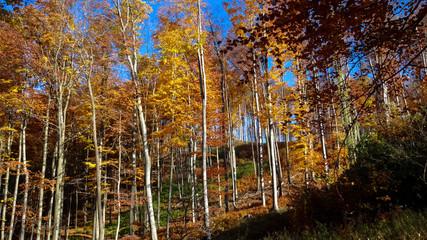 Autumn forest in Slovakia, Little Carphatian