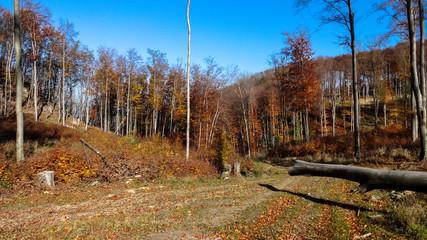gold autumn in Little Carphatian, Slovakia aroun Zaruby