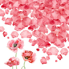 Watercolor petals of a poppy