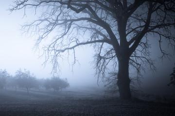 Foggy tree night landscape Fototapete
