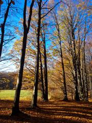 Autumn forest in Slovakia, Little Carphatian,