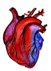 Aquarelle human colorful heart