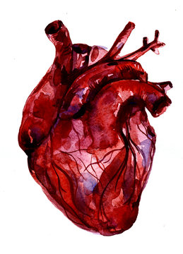 Aquarelle human red-blood heart