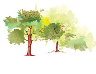 Trees in the park ,watercolor vector brush design,vector illustration