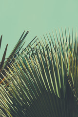 Abstrac tropical vintage background. Retro toned.