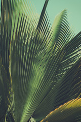 Abstrac, retro toned etxotic background.